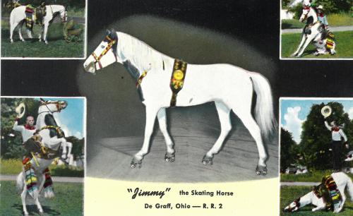 jimmy the skating horse